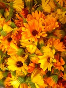 Ringelblumen-Blüten; Foto: Annika Patan