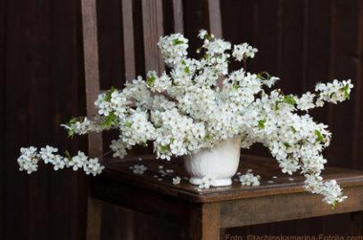 Barbarazweige: Blühende Glücksbringer im Winter